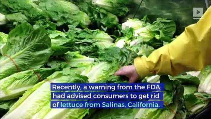 CDC and FDA Declare Lettuce Safe to Eat and E.Coli Outbreak Over