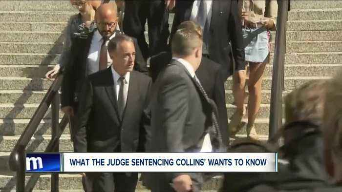 What the Judge sentencing Chris Collins wants to know