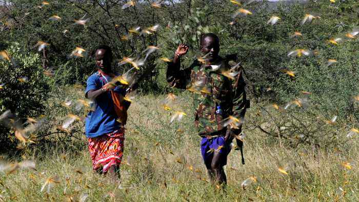 Locust swarms threatens East Africa's crops