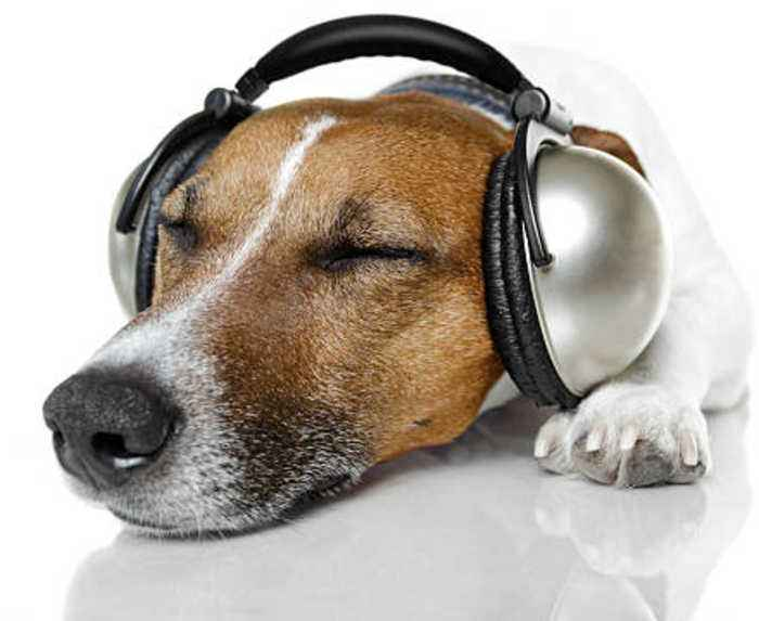 Build a Music Playlist for Your Pet With Spotify