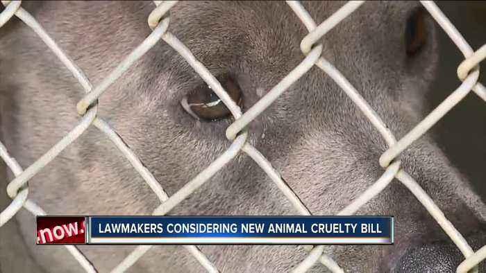 Lawmakers considering new animal cruelty bill