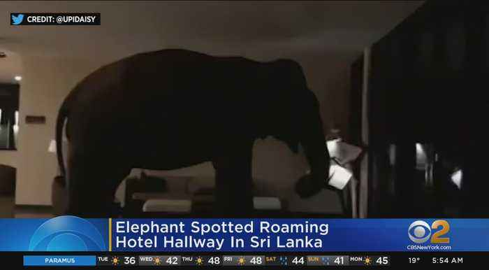 Elephant Spotted Roaming Sri Lanka Hotel