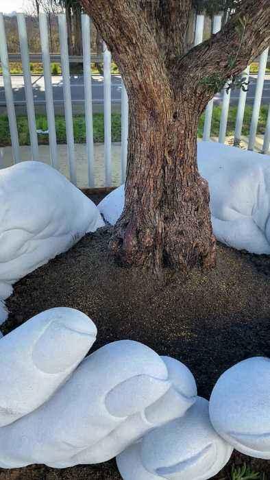 Man Creates Beautiful Sculpture around Olive Tree
