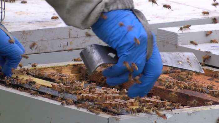 Thousands of Dollars' Worth of Beehives Stolen from California Man