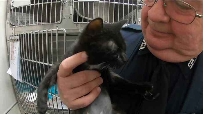 A lucky rescue for a black kitten at the SPCA Serving Erie County