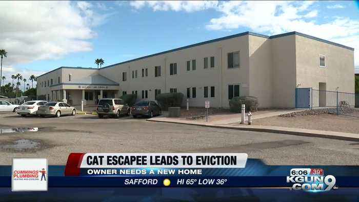 Escaped cat causes eviction