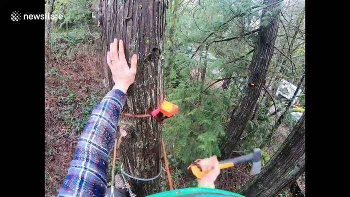 Tree climbing arborist in Washington nearly has a terrifying work accident