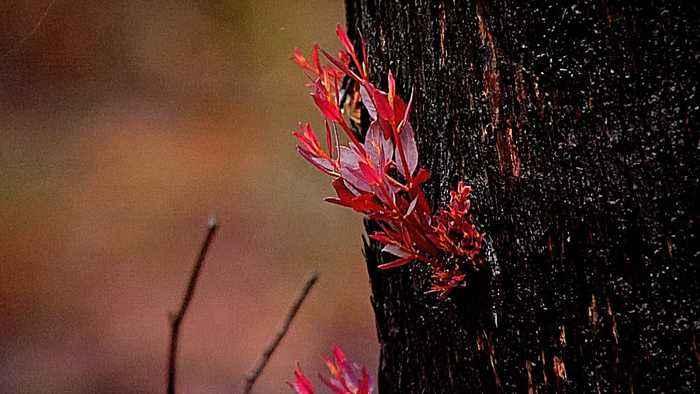 Australia bushfires: Heavy rains bring relief, pollution warnings