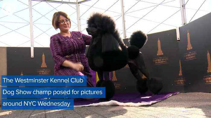 WEB EXTRA: Westminster Dog Show Winner On Victory Tour