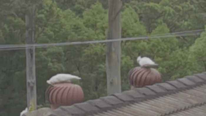 Whirly Birds Enjoy a Rooftop Spin