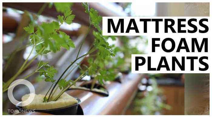 Using old mattress foam to grow plants