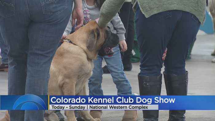 4 Things To Do In Colorado This Weekend