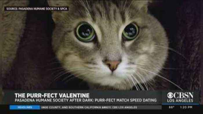 Pasadena Humane Society Hosts Valentine's Day Cat Speed Dating With $14 Adoption Fees