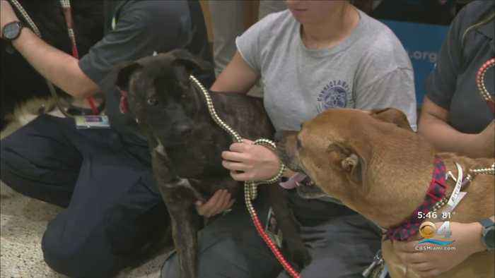 'Unleash Your Love' For Your Pets This Valentine's Day
