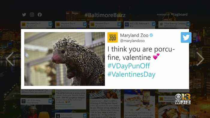 Baltimore Buzz: If You Forgot, It's Valentine's Day! Here's How Baltimore Is Celebrating