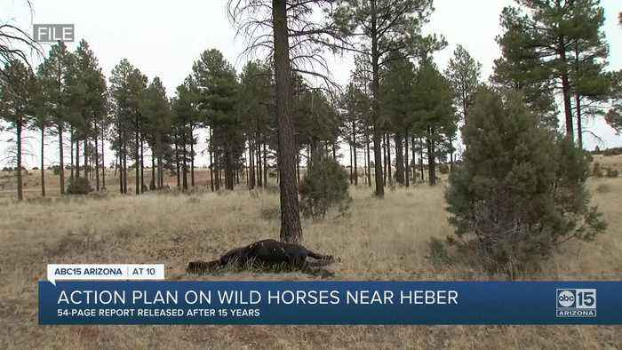 Apache-Sitgreaves National Forests release Heber wild horse management plan