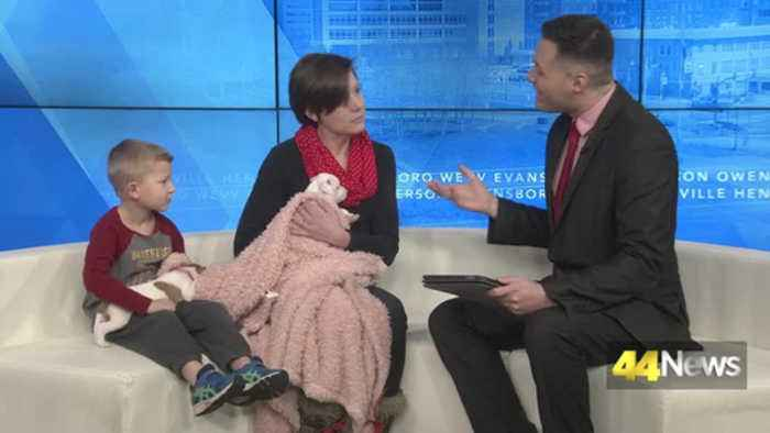 Furry Friend Friday: Adopt Dot and Valentine