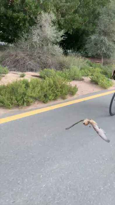 Bird Joins Group on Bike Ride