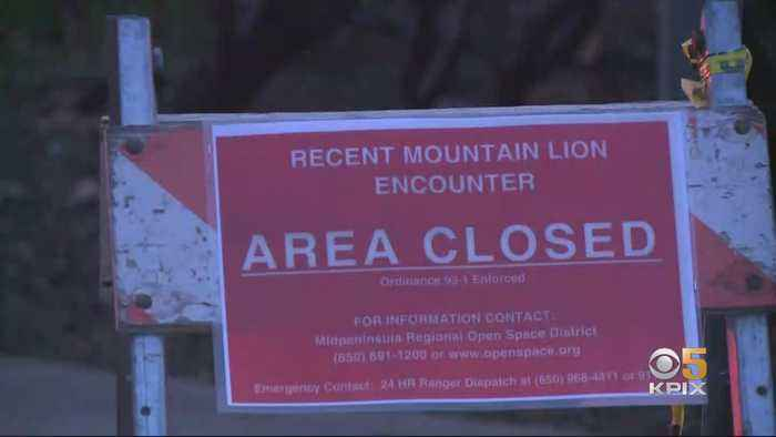 Child Injured In Mountain Lion Attack On Santa Clara County Park Trail