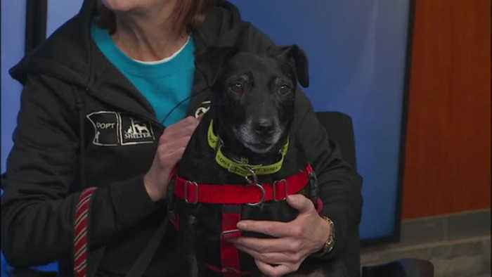 Pet of the Week: Whipper