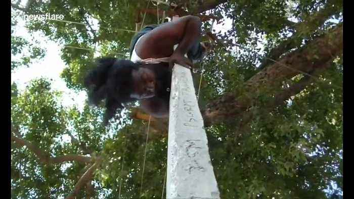 Man impressively climbs utility pole whilst upside down in southern India