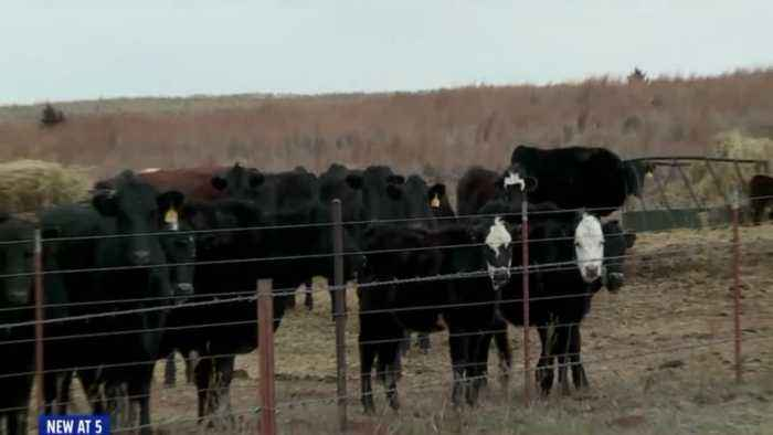 Oklahoma Sheriff Warns Against Online Scammers Targeting Farmers