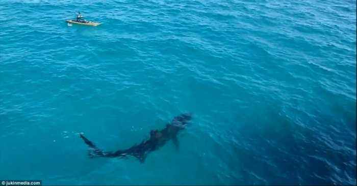 This Kayaker Had An Incredible Encounter With A Giant Shark
