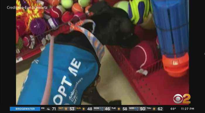 Coronavirus Update: New Yorkers Offer To Foster Shelter Pets During Isolating Crisis