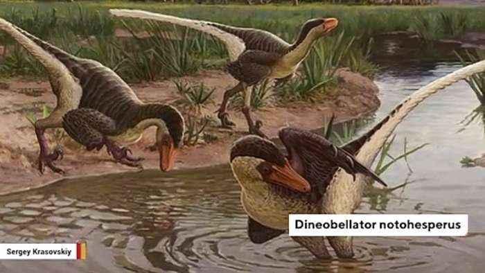 Newly Found Feathered Dinosaur Roamed New Mexico 67 Million Years Ago