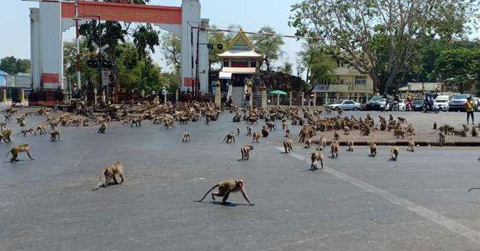 Hundreds of hungry primates reenact 'Planet of the Apes' in downtown Lopburi City, Thailand