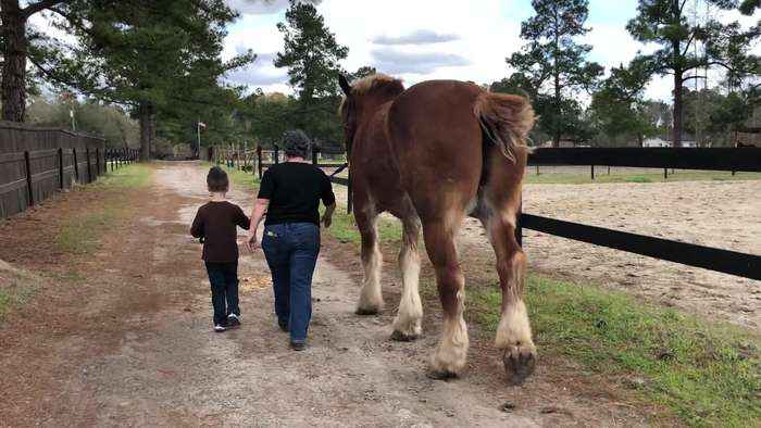 Five-Year-Old Walks Huge Draft Horse Along With Grandma