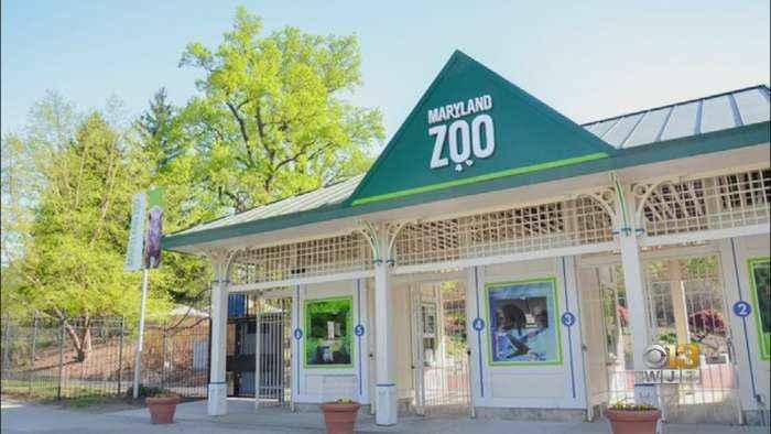 Maryland Zoo, National Aquarium Extending Closures Due To Coronavirus