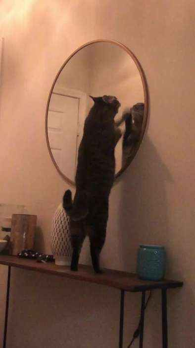 Cat Furiously Scratches Mirror to Seek Owner's Attention