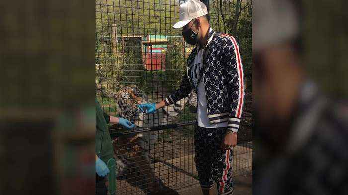 Pierre-Emerick Aubameyang feeds a tiger at wildlife park