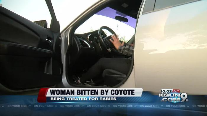 Tucson woman bit by a coyote on the west side one news for Az game and fish portal