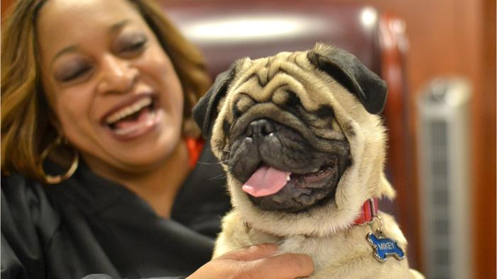 Leading Cause Of Death In Pugs - One News Page VIDEO