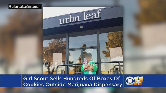 girl scouts eye whether cookie seller near pot   one news