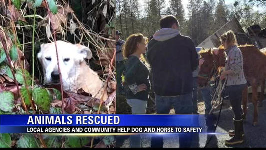 Dog Rescue Grants Pass