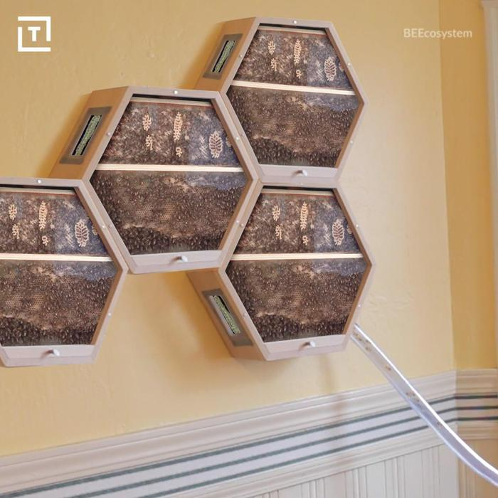 keep a beehive in your house