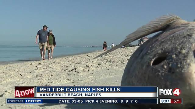 Residents say red tide is the worst they 39 ve seen one for Tides 4 fishing sarasota