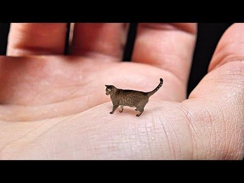 World S Smallest Cat Cute Tiny And Mean One News Page