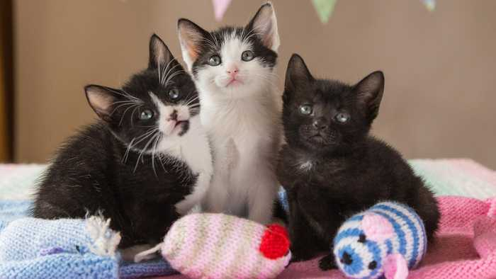 News video: Rescued Kittens Have Newborn Photos Inspired By Future Royal Baby