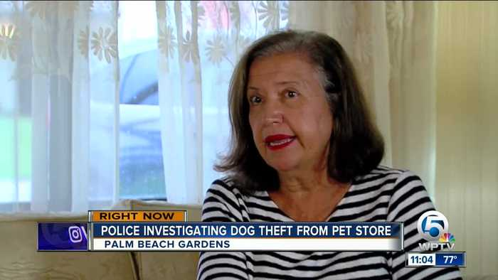 News video: Police: Family's dog stolen from Palm Beach Gardens Petco