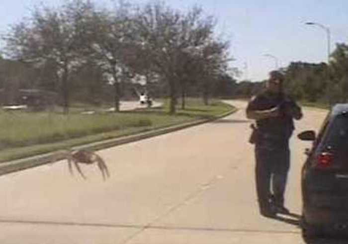 'Giant' Spider on Dashcam Footage 'Sneaks Up' on Texas Police