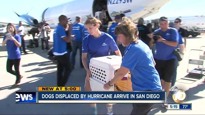 Displaced Hurricane Michael dogs arrive in San Diego