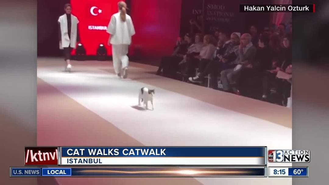 915cd12b9e Cat walks catwalk in Turkey - One News Page VIDEO