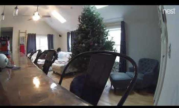 Curious Dog Tugs at Christmas Tree and Makes it Fall