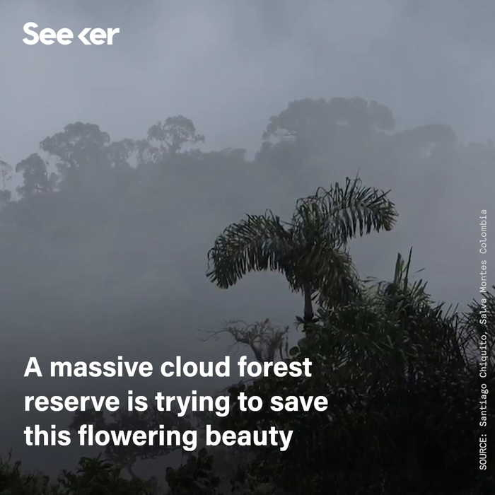 A Refuge to Protect Colombia's Endangered Orchids
