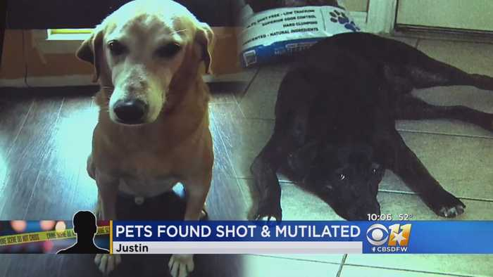 Authorities Seek Men Who Killed, Mutilated Dogs Frightened By Storm