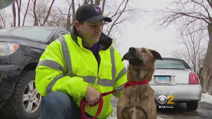 Questions About Whether Kennels Should Always Be Staffed After West Chicago Fire Kills 30 Dogs